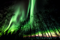 Northern Lights_Whitehorse 1