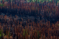 After Forest Fire_Carmacks 1
